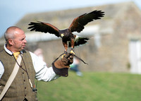 """Falconry of the Victorian Age at Dover Castle"""